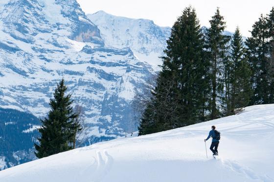 Schneeschuhtour - Jungfrau Region 3 [article_picture_small]