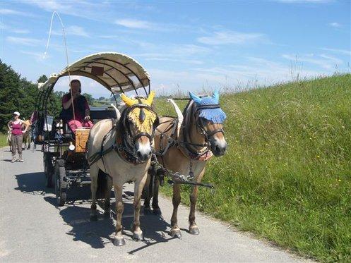 Planwagenfahrt - im Emmental für 7 Personen 1 [article_picture_small]