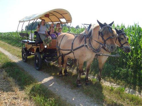 Planwagenfahrt - im Emmental für 7 Personen 2 [article_picture_small]