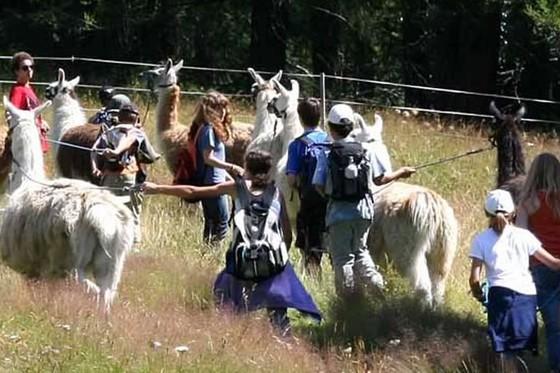 Trekking demi-journée - accompagné de lamas  [article_picture_small]