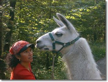 Trekking demi-journée - accompagné de lamas 2 [article_picture_small]