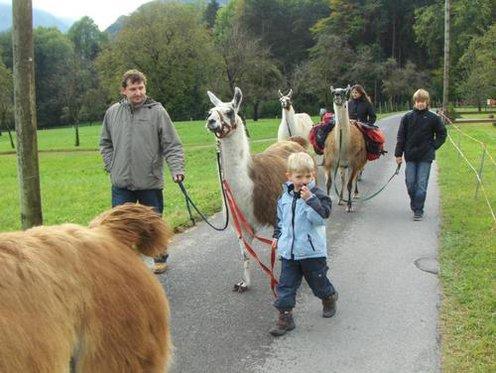 Trekking demi-journée - accompagné de lamas 3 [article_picture_small]