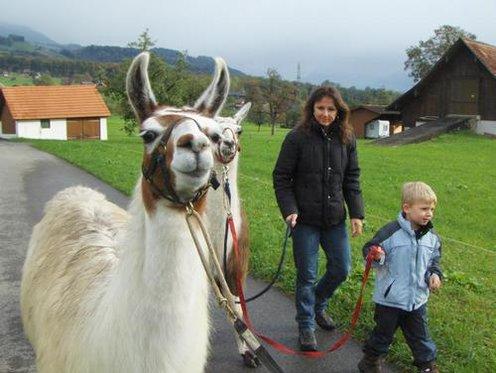 Trekking demi-journée - accompagné de lamas 4 [article_picture_small]