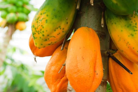 Tropenhaus Frutigen - Familieneintritt 11 [article_picture_small]