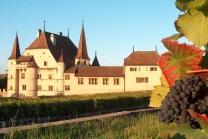 Besuch im Weingut  - mit Wein Degustation