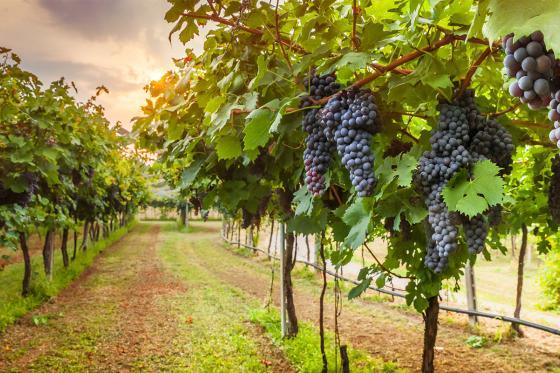 Wein selber machen - Assemblage Gutschein 2 [article_picture_small]