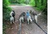 Husky Tagestrekking-im Zürcher Weinland 8