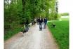 Husky Tagestrekking-im Zürcher Weinland 9