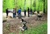 Husky Tagestrekking-im Zürcher Weinland 10