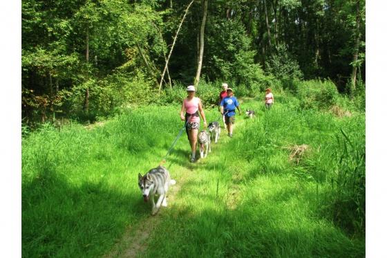 Husky Tagestrekking - im Zürcher Weinland 4 [article_picture_small]