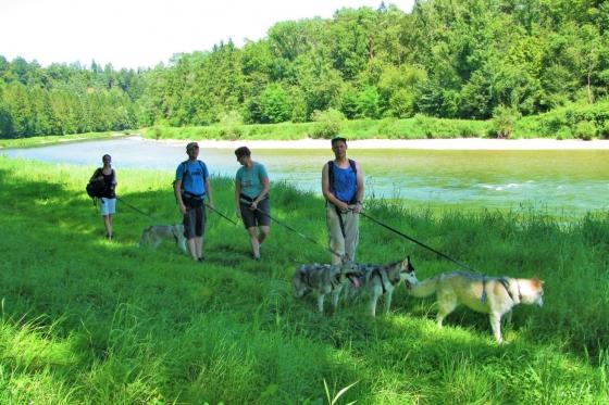 Husky Tagestrekking - im Zürcher Weinland 5 [article_picture_small]