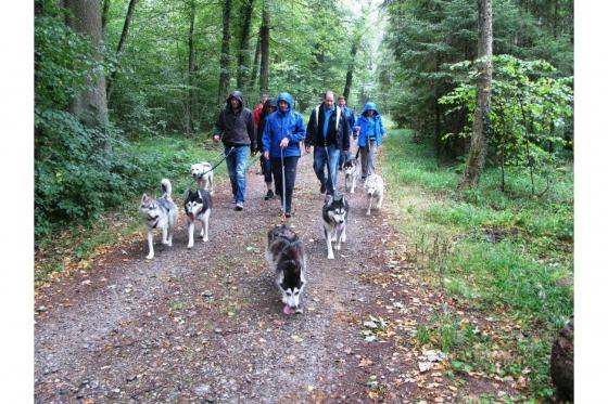 Husky Tagestrekking - im Zürcher Weinland 6 [article_picture_small]