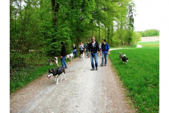 Husky Tagestrekking - im Zürcher Weinland 8 [article_picture_small]