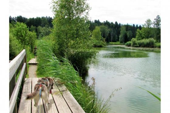 Husky Tagestrekking - im Zürcher Weinland 10 [article_picture_small]