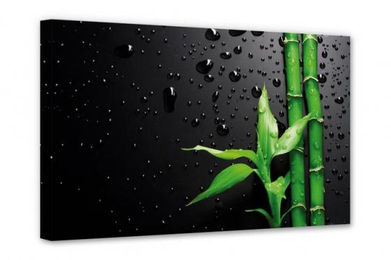 Leinwandbild  -  Bamboo Over Black   - in div. Grössen erhältlich 1
