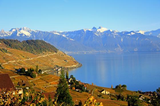 Dégustation de vins - Plus de 200 caves à choix  [article_picture_small]