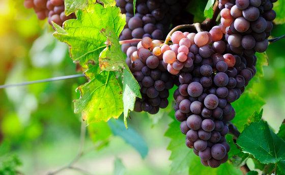 Dégustation de vins - Plus de 200 caves à choix 3 [article_picture_small]