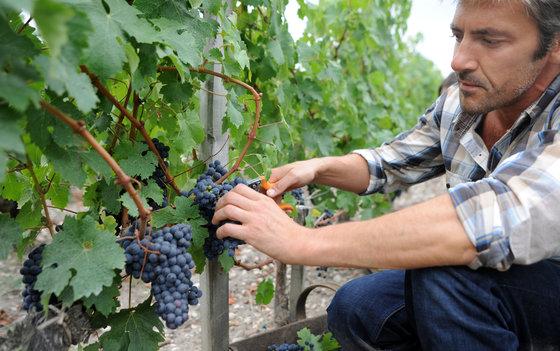 Dégustation de vins - Plus de 200 caves à choix 4 [article_picture_small]