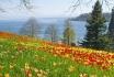 Übernachtung am Bodensee-inkl. Besuch der Blumeninsel Mainau 1