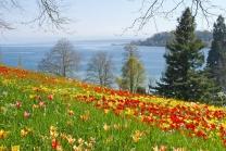 Übernachtung am Bodensee - inkl. Besuch der Blumeninsel Mainau