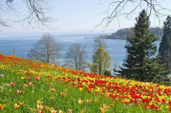 Übernachtung am Bodensee - inkl. Besuch der Blumeninsel Mainau  [article_picture_small]
