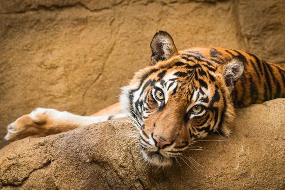 Zoo Familieneintritt - für 2 Erwachsene und 2 Kinder  [article_picture_small]