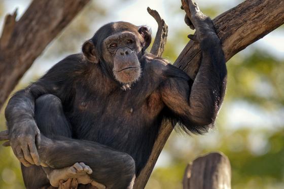 Zoo Familieneintritt - für 2 Erwachsene und 2 Kinder 2 [article_picture_small]