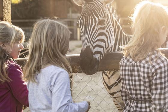Zoo Familieneintritt - für 2 Erwachsene und 2 Kinder 3 [article_picture_small]