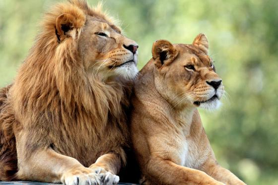 Sonntagsbrunch im Zoo - Brunch Erlebnis für 2 Personen  [article_picture_small]