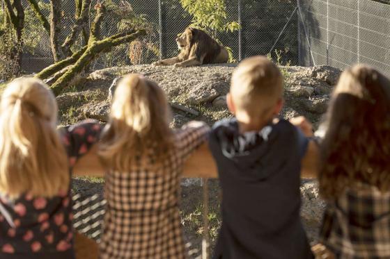 Sonntagsbrunch im Zoo - Brunch Erlebnis für 2 Personen 2 [article_picture_small]
