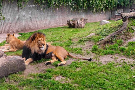 Sonntagsbrunch im Zoo - Brunch Erlebnis für 2 Personen 8 [article_picture_small]