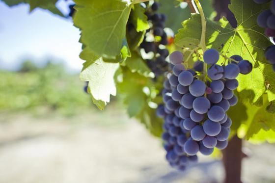 Wein Abo Geschenk - 3 Monate exzellenten Wein geniessen 1 [article_picture_small]