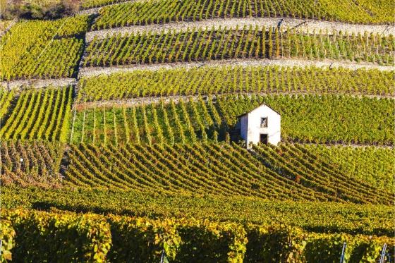 Dégustation de vin pour deux - Cave Ardevaz (VS) avec apéritif & bouteille offerte 1 [article_picture_small]