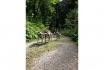 Husky et Kart-Randonnée avec attelage 3