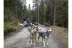 Husky et Kart-Randonnée avec attelage 7