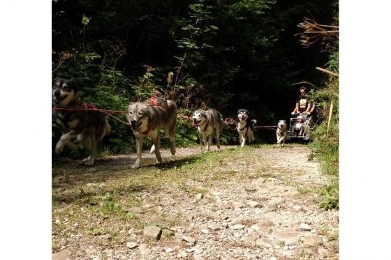 Husky et Kart - Randonnée avec attelage 1 [article_picture_small]