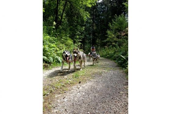 Husky et Kart - Randonnée avec attelage 2 [article_picture_small]