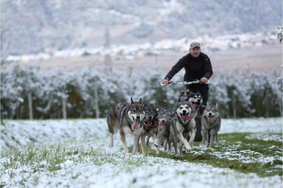 Husky et Kart - Randonnée avec attelage 4 [article_picture_small]