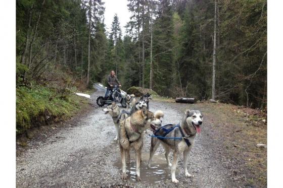 Husky et Kart - Randonnée avec attelage 6 [article_picture_small]