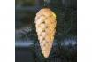 LED Deko Celina Cone - 15cm  [article_picture_small]