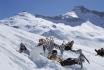 Schneeschuhtour Einsteiger-Winter Erlebnis in Adelboden 1