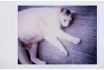 Lomo Instant White Edition - Photos instantanées + 3 objectifs inclus 6 [article_picture_small]