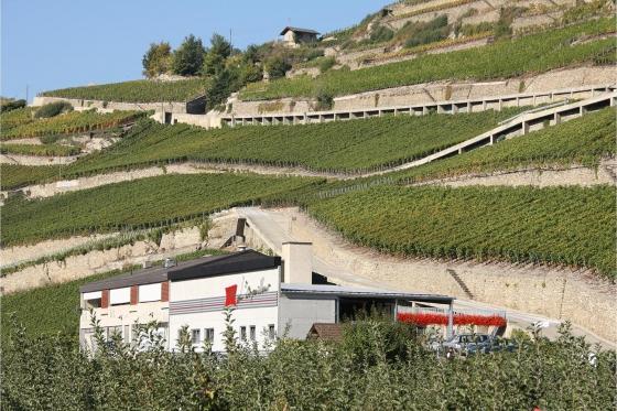 Dégustation de vin pour deux - Cave L'Orpailleur (VS) avec apéritif et 2 bouteilles offertes 2 [article_picture_small]