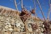 Dégustation de vin pour deux-Cave de l'Orlaya (VS) avec visite, apéro et bouteille offerte 5