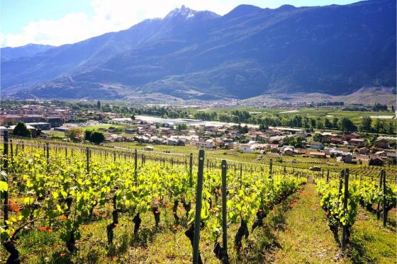 Dégustation de vin pour deux - Cave de l'Orlaya (VS) avec visite, apéro et bouteille offerte 1 [article_picture_small]