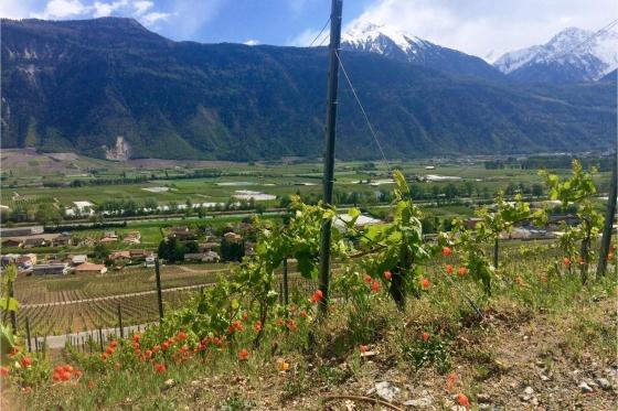 Dégustation de vin pour deux - Cave de l'Orlaya (VS) avec visite, apéro et bouteille offerte 2 [article_picture_small]