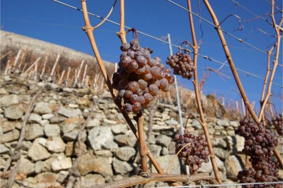 Dégustation de vin pour deux - Cave de l'Orlaya (VS) avec visite, apéro et bouteille offerte 4 [article_picture_small]