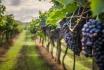 Dégustation de vin pour deux-Domaine des Remans (VD) avec visite, apéro et bouteilles offertes 1
