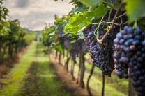 Dégustation de vin pour deux - Domaine des Remans (VD) avec visite, apéro et bouteilles offertes