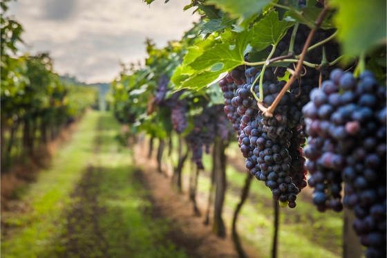 Dégustation de vin pour deux - Domaine des Remans (VD) avec visite, apéro et bouteilles offertes  [article_picture_small]